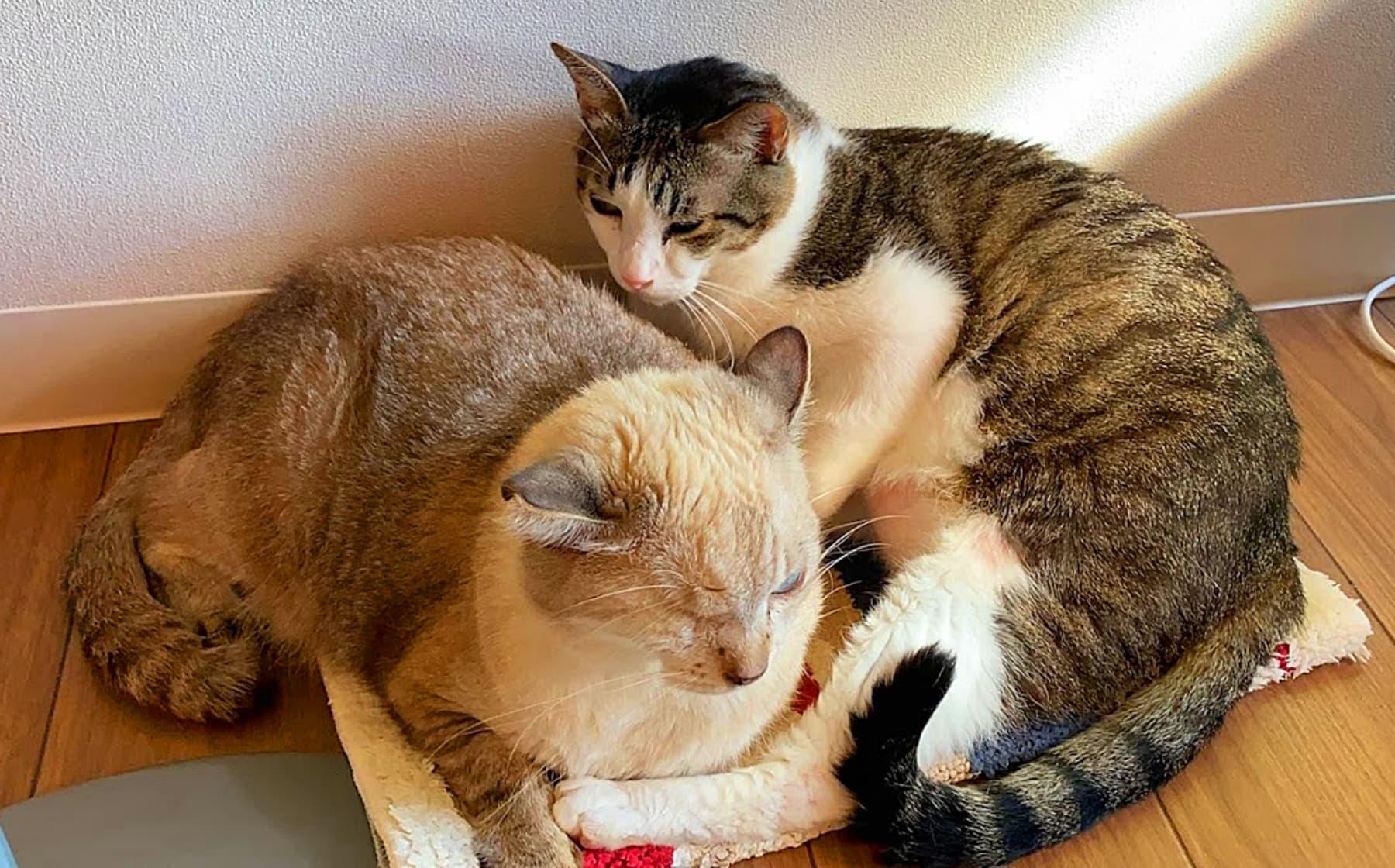 『保護猫とつながるカフェ&ショップ Nouvelle Vague(ヌーベルバーグ)』 特徴1