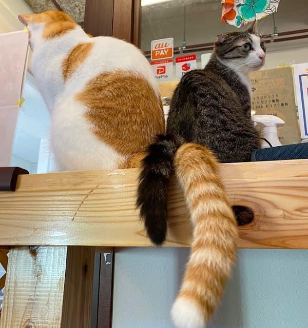 『保護猫とつながるカフェ&ショップ Nouvelle Vague(ヌーベルバーグ)』 お店では毎日、保護猫譲渡相談が可能です