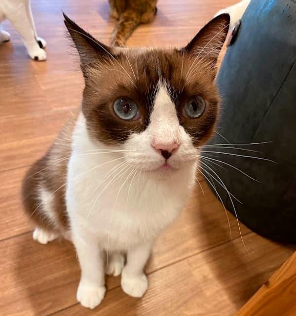 『保護猫とつながるカフェ&ショップ Nouvelle Vague(ヌーベルバーグ)』 『猫たちの健康』を一番に考えています。