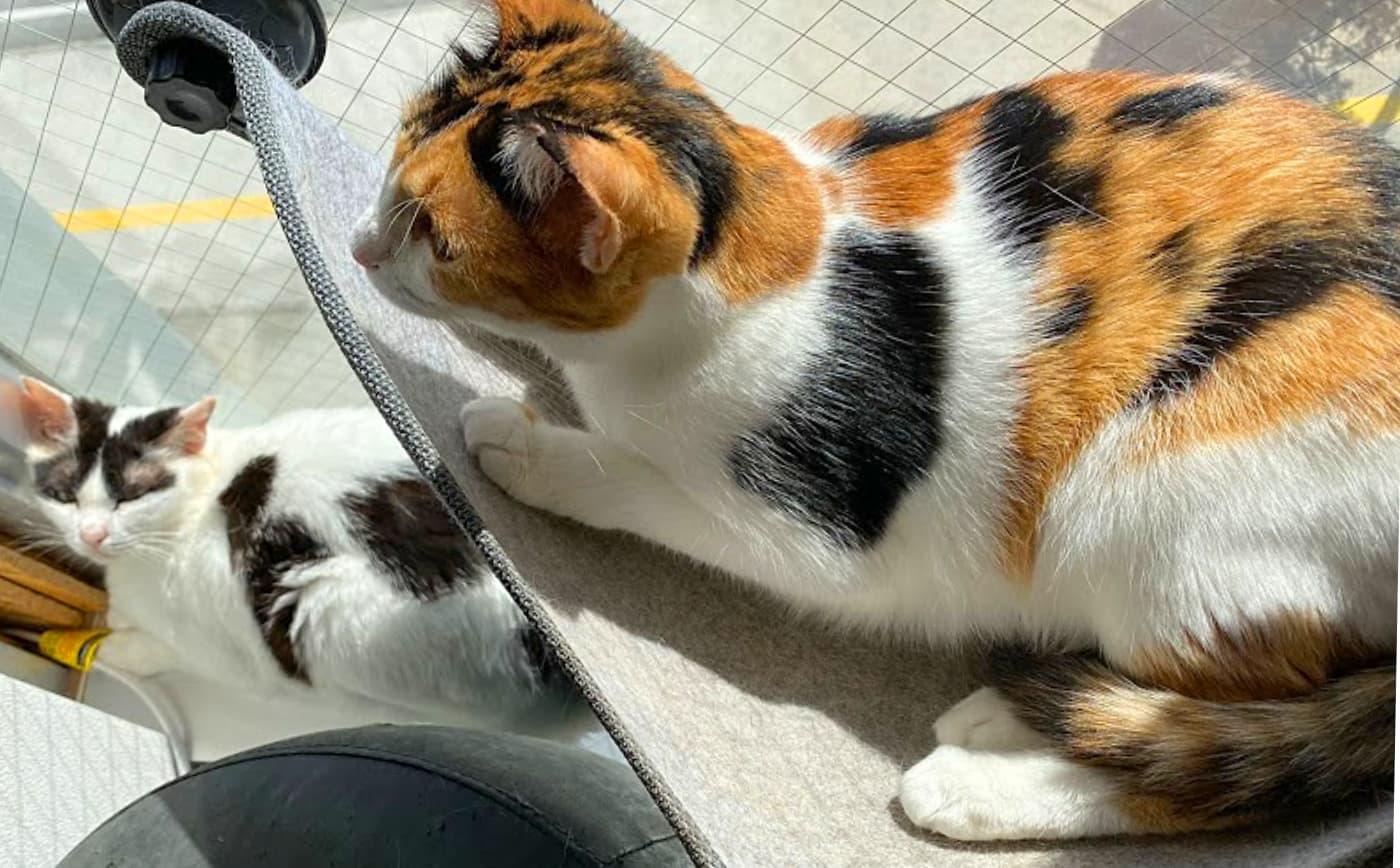 『保護猫とつながるカフェ&ショップ Nouvelle Vague(ヌーベルバーグ)』 特徴3