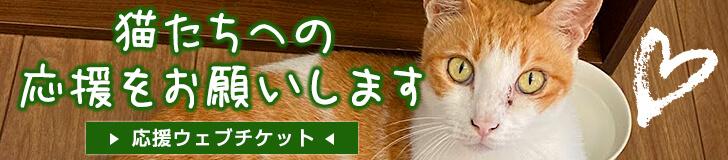 保護猫とつながるカフェ&ショップ Nouvelle Vague(ヌーベルバーグ) 猫たちへの応援をお願いします。応援ウェブチケット販売中です。