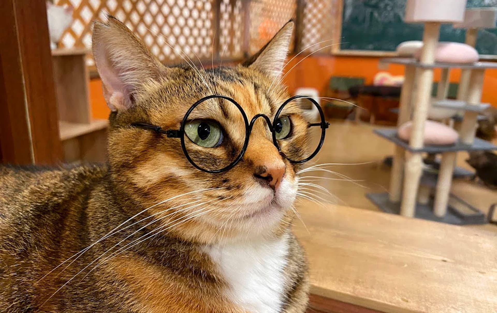 猫ちゃんとの生活での注意点